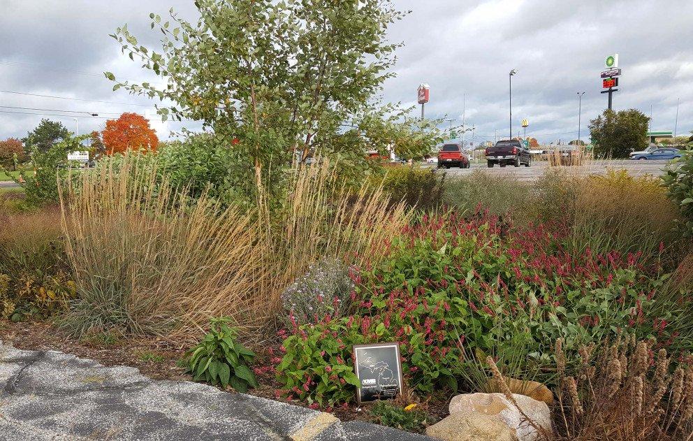 Ox Creek Rain Garden Keep Michigan Beautiful Award